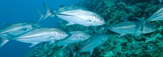 wa_fisheries_image_550